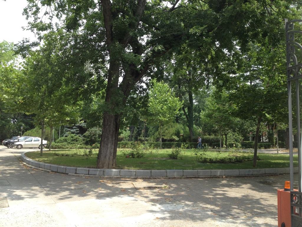 modrogan parcul filipescu 2