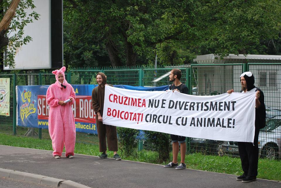 viata animalelor circ 3